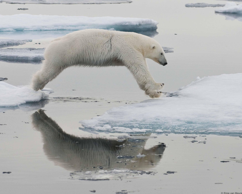 Bear 2 jumping